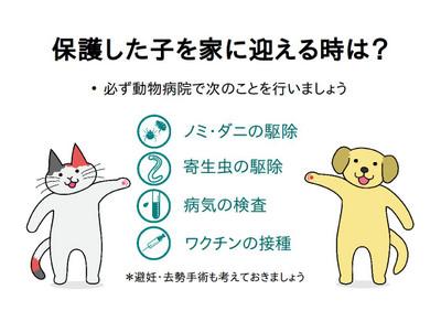 Catdogstanding