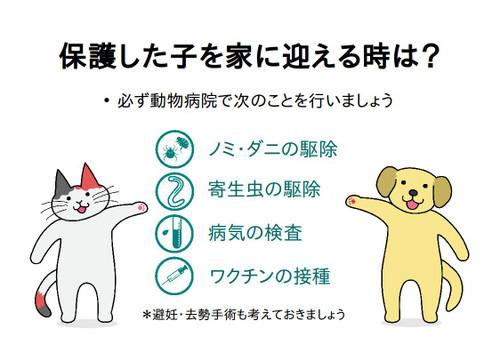 Catdogstanding_3
