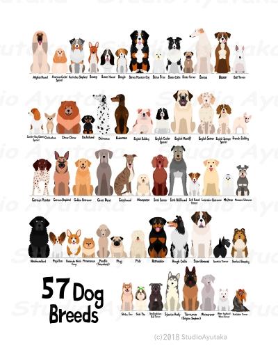 種類 犬 一覧 の